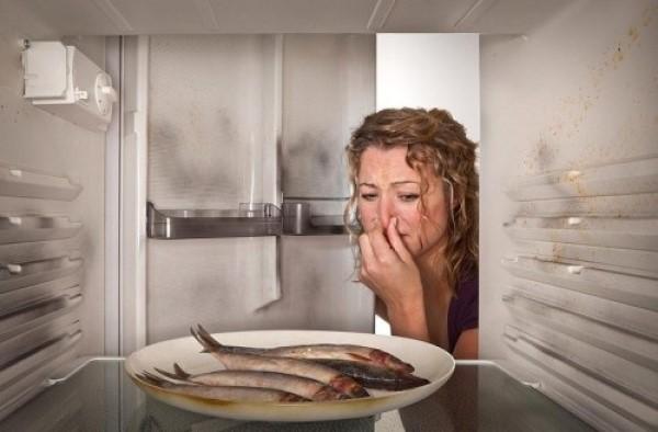 sửa tủ lạnh sanyo có mùi hôi